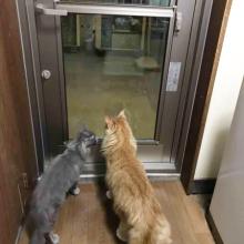 新しいドアに猫たちも興味津々